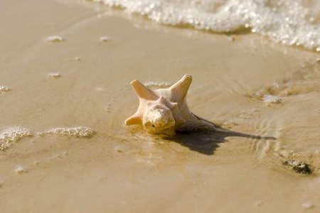 seashell at waters edge Stock Photo