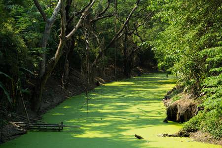 duckweed: Duckweed river Stock Photo