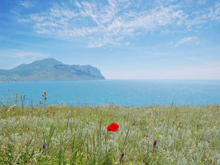 Poppies and the blue sea photo