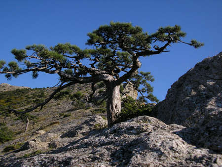 sunshines: Lonely tree on a mountain