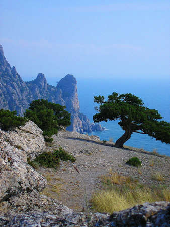 sunshines: Lonely trees on a mountain near the sea