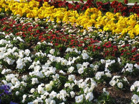 odori: Odori Park, Sapporo City, Japan Stock Photo