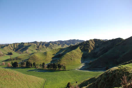 New zealand green hills in country photo