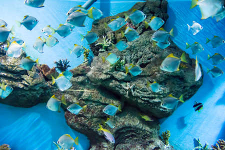 underwater image of a flock of fishes photo