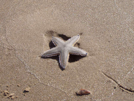 Starfish on sandy beach photo