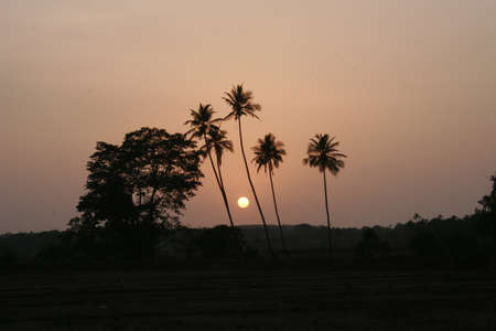 taken: Palms and sun, tropical sunset taken in Goa, India Stock Photo