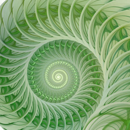Abstract fractal spiral. Shell background, Spiral symmetry Fibonacci shell section. Half cross, golden ratio structure, growth close up Pompilius nautilus Stock Photo