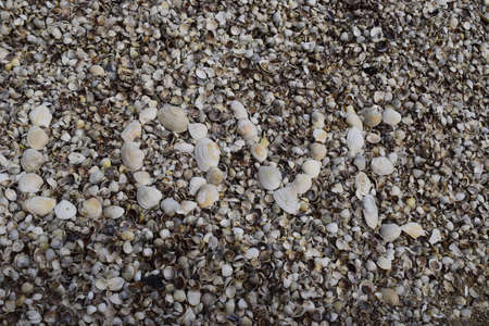 Love sea text on shell beach background. Relaxation, vacation idyllic concept.