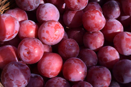 Ripe Plums Background, Texture. Ripe juicy plum close-up. Red plum in the garden. Gardening concept. Production of juices and fruit drinks. Harvest concept. Stock Photo
