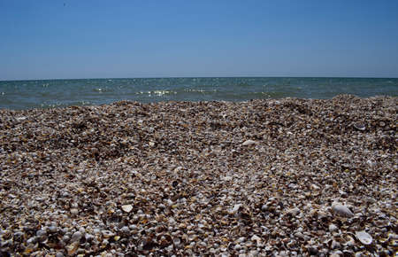 Sea skyline. Sea shells on the ocean, thrown out by the waves of the surf. Sea horizon and Sea shells and surf foam. The Beach and The Sea. Stones and shells on the beach. Stock Photo