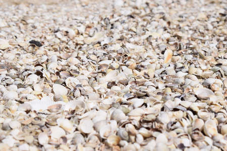 Sea shells composition. Natural background of broken seashells on the beach. Stock Photo - 129135564