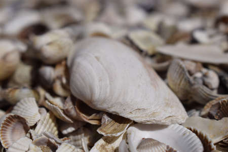 Sea shells composition. Natural background of broken seashells on the beach.