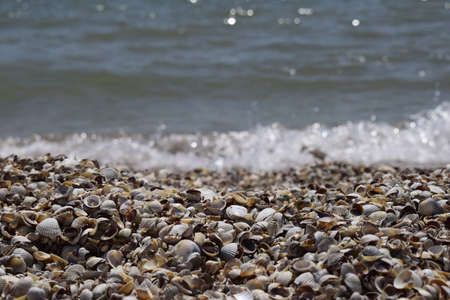 Shell and surf. Sea shells on the ocean, thrown out by the waves of the surf. The Beach and The Sea Stock Photo - 129135755