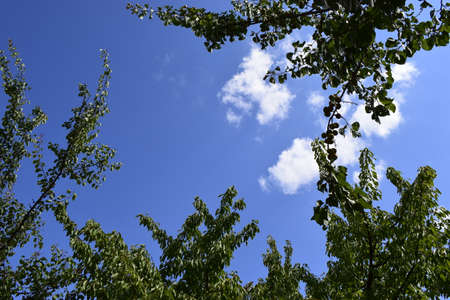 Green leaf frame and sky. Trees framing a blue sky with clouds.
