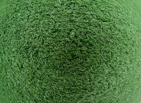 fish eye lens: Grass texture fish eye lens