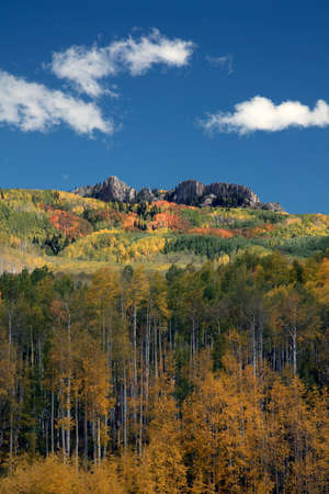Autumn Fall colors of the Aspen groves in Kebler Pass near Crested Butte Colorado America. Foliage of aspens turn to yellow and orange  Stock Photo
