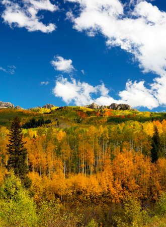 Aspen Groves in Kebler Pass Colorado are amonst the best Aspen Groves in America for their colorful yellow and orange Autumn Fall foliage Stock Photo