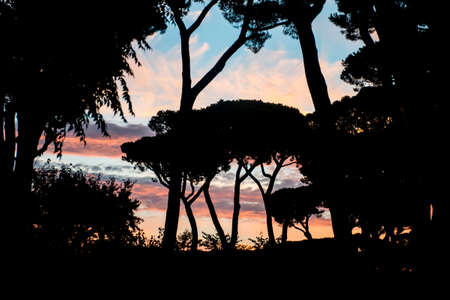 livorno: Sunset at a beach in Livorno San Vincenzo with the shape of trees