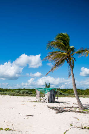 caribbeans: Beach with Palms at Playa del Carmen Mexico Yucatan