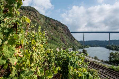 mosel: Famous German Wine Region Moselle River with bridge in Winningen