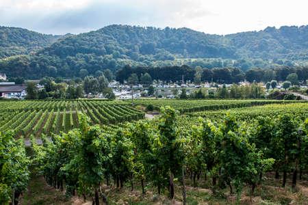 Famous German Wineyard Region Moselle River in Winningen 2