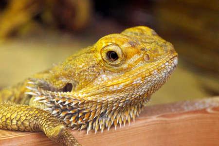 reptile: Green colored skin lizard a nice reptile close up 2 Stock Photo