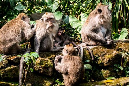 ubud: Bali Indonesia Ubud famous Monkey Forest Family