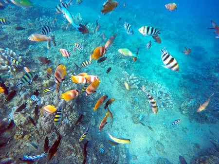 Coral Wildlife in Bali Indonesia underwater colorful fish 3 Banco de Imagens