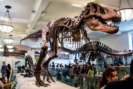 Esqueleto de dinosaurio monstruo prehistórico detalle T Rex