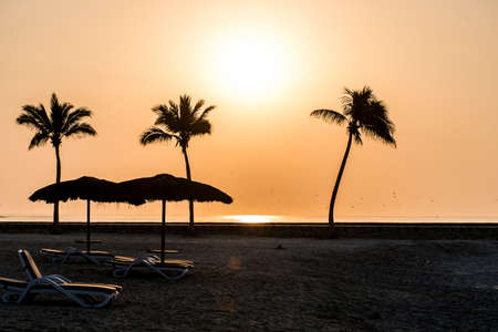 Amazing Sunset palms sun lounger at beach Salalah Oman 2