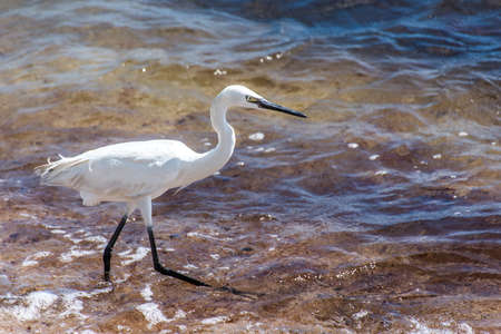 Mexican heron bird beach del carmen Yucatan 22 Stock Photo