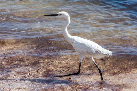 Mexican heron bird beach del carmen Yucatan 23