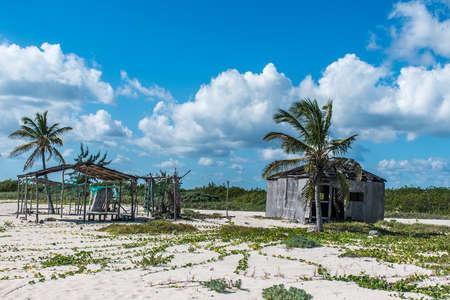 Beach Palm at Playa del Carmen Mexico Yucatan 3