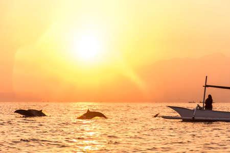 Bali free Dolphin wildlife Watching boat Lovina Beach
