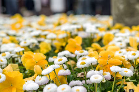 background with beautiful pattern of yellow and white flowers field of flower blurry close up Stock Photo