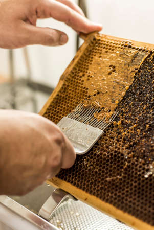 curative: Honeycomb will open unwaxing fork beekeeper uncapped for harvest golden delicious honey closeup