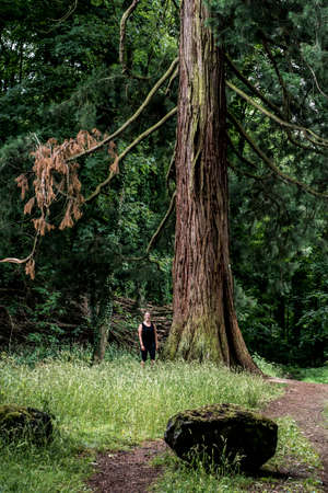 reverent: German National Park hiking girl on trail beside a huge old mammoth tree