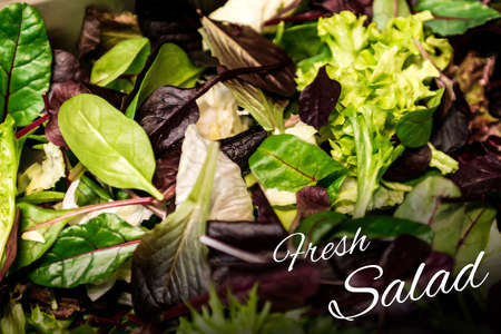 Fresh salad text with mixed greens lettuce arugula mesclun mache close up Healthy food meal