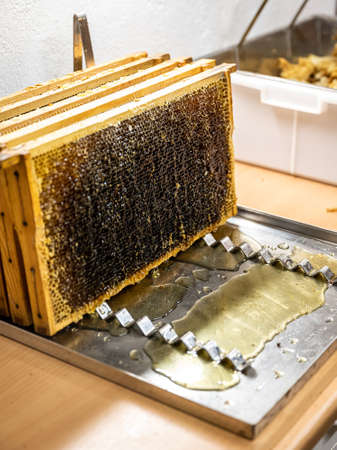 Glossy yellow golden honey comb reflection mirror sweet honey drips flow during harvest background with textspace