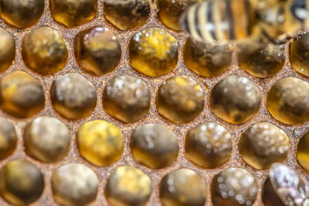 macro Honey bee beehive wax frame filled with pollen flower powder food closeup.