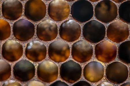 macro Honey bee beehive wax frame filled with pollen flower powder food closeup.