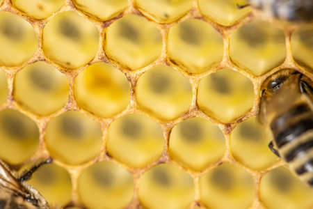 Honey comb gold background texture natural cell closeup macro.