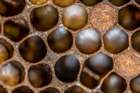 Honey bee beehive Wax Frame with bees breed, eggs and worms next generation. Reklamní fotografie