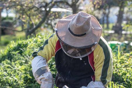 Beekeeper making fresh golden honey working outdoor with bees