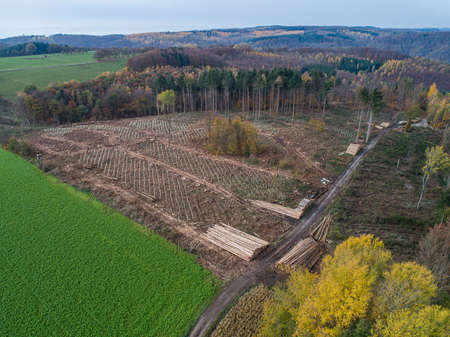 aerial view chopped Woodland new plantation Germany replanted with sapling deciduous trees protected with plastic tubes 免版税图像
