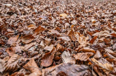 brown autumn leaves fall winter season background close up pattern