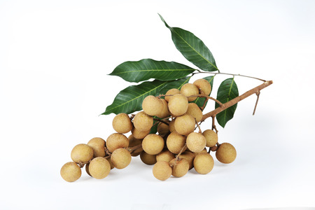 longan: Golden Longan isolated on a white background with shadow