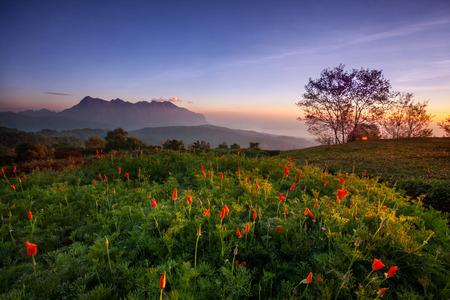 taman: Chiangmai Mae Taman