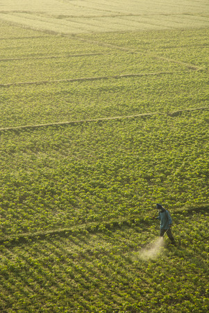 A Man Spraying in the Bean Fields at Mae Hong SonThailand photo