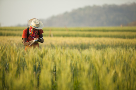 investigar: Investigación para el Desarrollo del Campo de cebada en Samoeng Chiang Mai Tailandia Foto de archivo